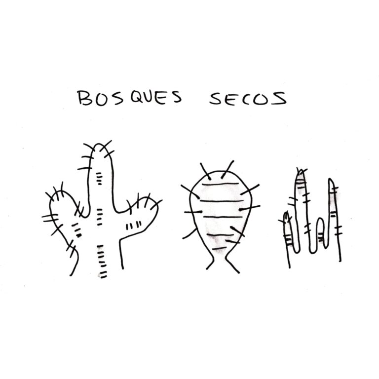 bosques secos